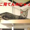 Photos: 2005/9/14【猫写真】どこ見てんのにゃ!!