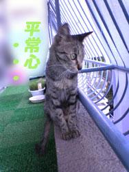 2005/9/10【猫写真】ムズムズ再びにゃ