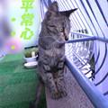 Photos: 2005/9/10【猫写真】ムズムズ再びにゃ