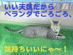 2005/9/17【猫写真】ベランダでごろごろにゃ♪
