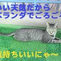 Photos: 2005/9/17【猫写真】ベランダでごろごろにゃ♪