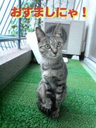2005/9/29【猫写真】おすましにゃ!