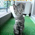 Photos: 2005/9/29【猫写真】おすましにゃ!