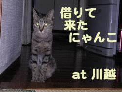 2005/9/23【猫写真】借りて来たにゃんこ~1