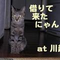 Photos: 2005/9/23【猫写真】借りて来たにゃんこ~1