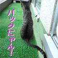 Photos: 2005/9/9【猫写真】バックにゃん!