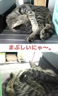 2005/9/3【猫写真】今日のベストショット2枚にゃ!
