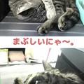 Photos: 2005/9/3【猫写真】今日のベストショット2枚にゃ!