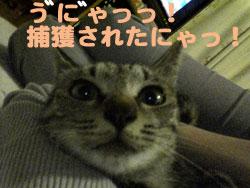 051003-【猫写真】捕獲されたにゃ!!