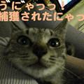 Photos: 051003-【猫写真】捕獲されたにゃ!!