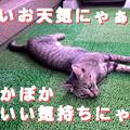 Photos: 051007-【猫写真】ぽかぽかぽかぽか