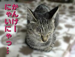 051021-2【猫写真】パパちゃん、お誕生日!