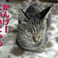 Photos: 051021-2【猫写真】パパちゃん、お誕生日!