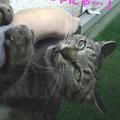 Photos: 051012-【猫写真】うにゃにゃにゃ・・・!