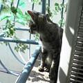 Photos: 051002-【猫写真】いい天気にゃ~