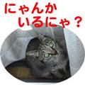 Photos: 051026-1【猫写真】にゃんだべんだ・・・