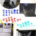 Photos: 051115-【猫写真】ニャンキン状態にゃ!?
