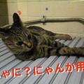 Photos: 051102-【猫写真】お昼寝してたのににゃ