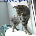 Photos: 051103-【猫写真】ベランダパトロールにゃ!