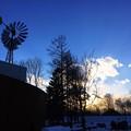 写真: 冬のシルエット