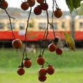 柿と小湊鐡道