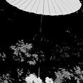 写真: 鎌倉牡丹