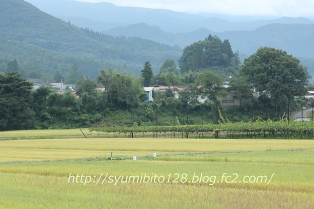 Photos: 秋 (2)