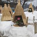 Photos: 冬咲きぼたん祭り