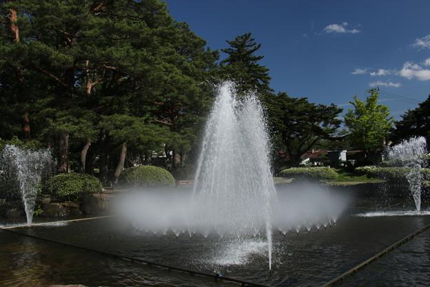 長井市 白つつじ公園 (2)
