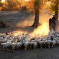 写真: 得意羊羊