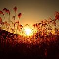 写真: 『秋の背比べ。。。』