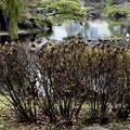 写真: 雀のなる木