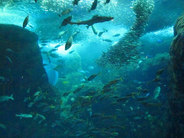 陽だまりの彼女の水族館
