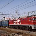 試6992 EF81-95+マヤ+カヤ+マニ