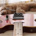Photos: Guitar002 レッドサンバースト テレキャスター
