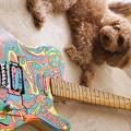 Photos: Guitar004 サイケペイントテレキャスター