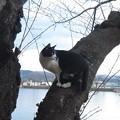 Photos: 野良猫木に登る