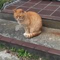 Photos: 歩いていたら猫発見