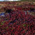 写真: 日本一早い紅葉を求めて 3