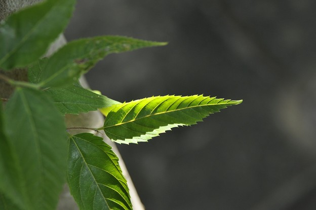 葉っぱの造形