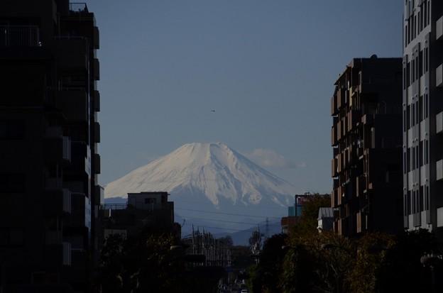 11月27日、富士見テラスから(3)