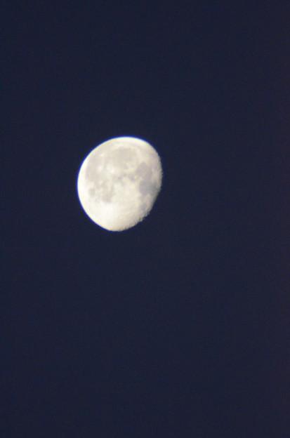 1月28日、未明の月
