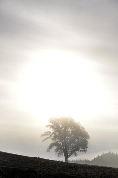 Photos: 朝霧の中の太陽と哲学の木