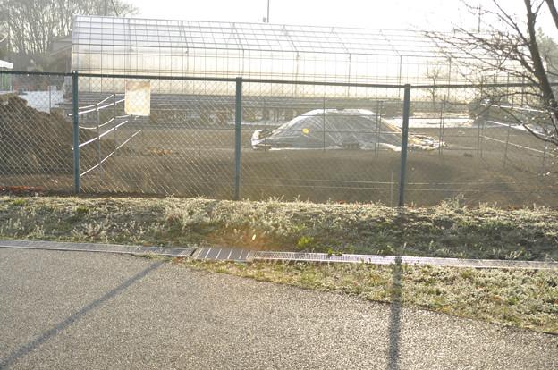 3月29日早朝、カワセミの巣のある農園