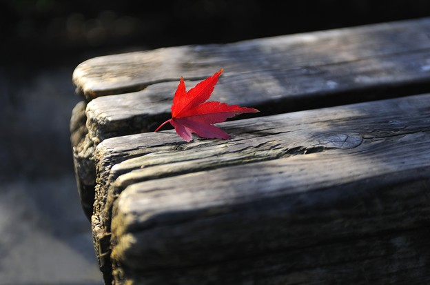 Lonely Autumn Leaves