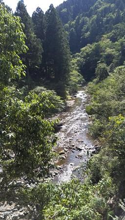 自然を感じる緑と峡谷