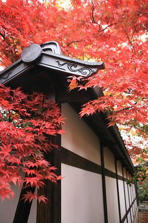 嵯峨釈迦堂の紅葉