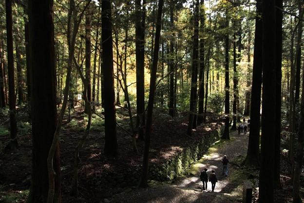 深い森の中の寺