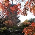 Photos: 五重塔と紅葉