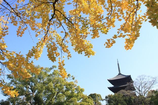 銀杏と五重塔